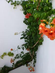 Gelato flower